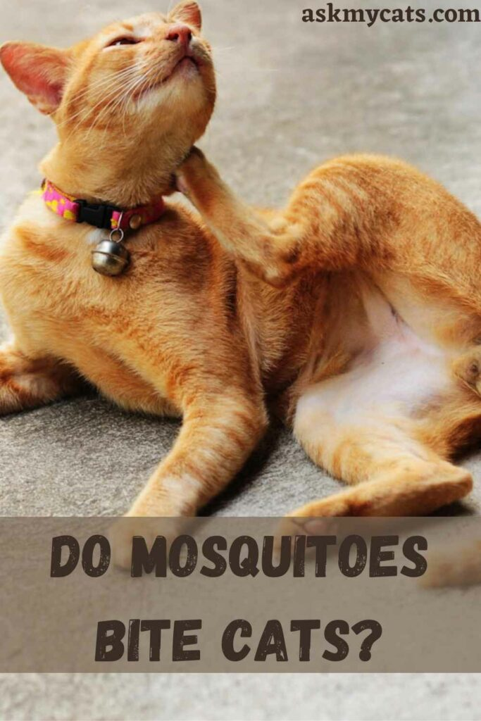 Do Cats Eat Mosquitoes?