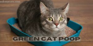 Green Cat Poop: Why Is My Cat's Poop Green?