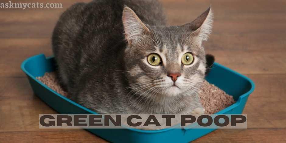 Green Cat Poop