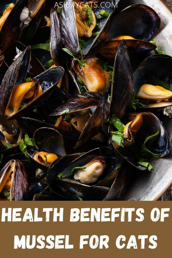 health benefits of mussel for cats?