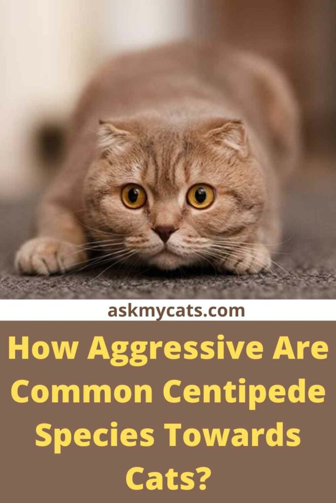 How Aggressive Are Common Centipede Species Towards Cats?