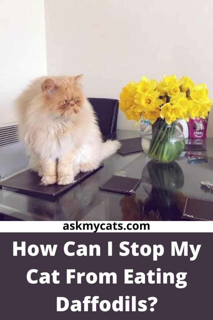 How Can I Stop My Cat From Eating Daffodils?