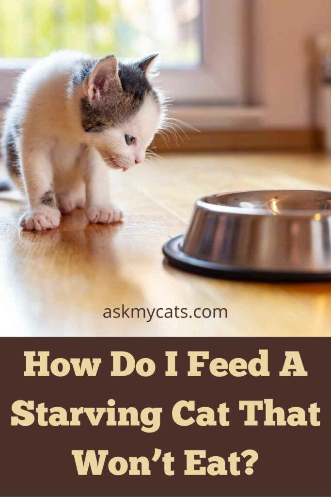 How Do I Feed A Starving Cat That Won't Eat?