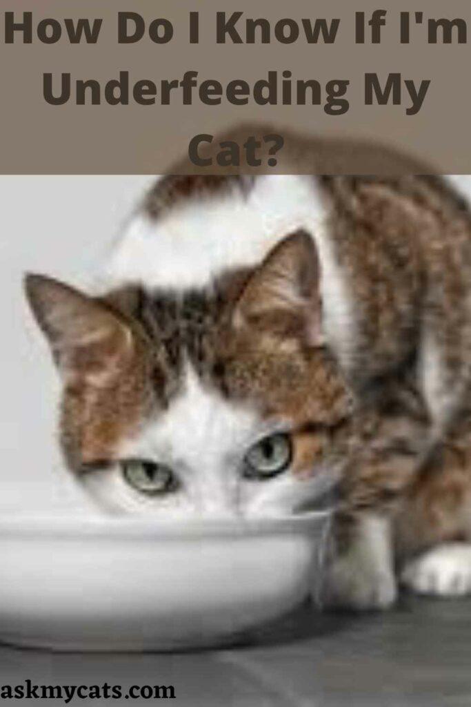 How Do I Know If I'm Underfeeding My Cat?