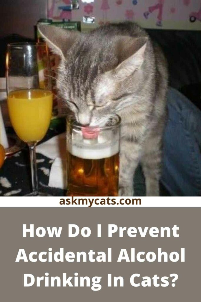 How Do I Prevent Accidental Alcohol Drinking In Cats?