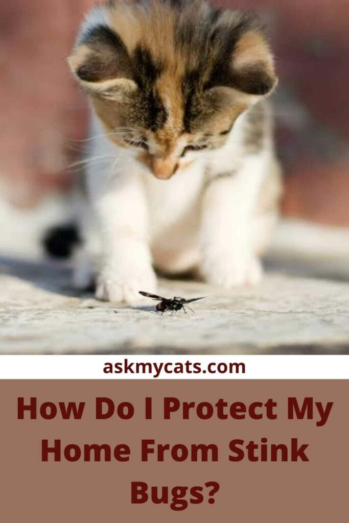 How Do I Protect My Home From Stink Bugs?