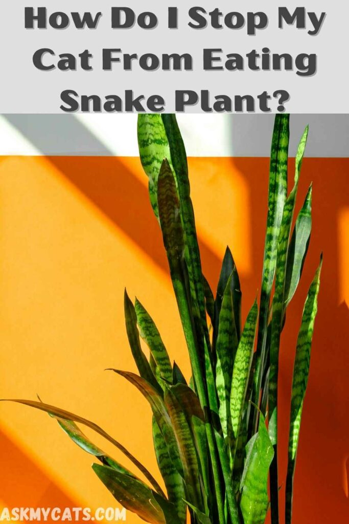 how do i stop my cat from eating snake plant?