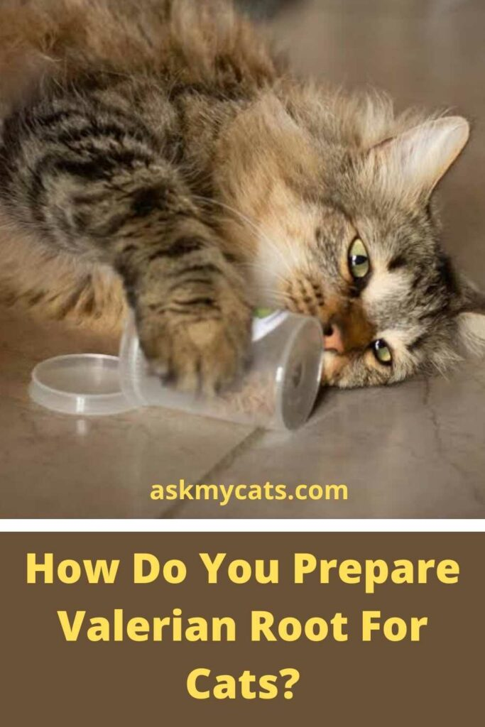 How Do You Prepare Valerian Root For Cats?