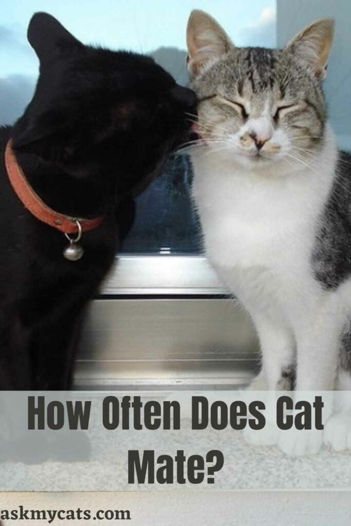 How Often Does Cat Mate?