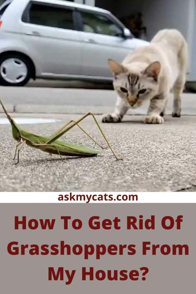 How To Get Rid Of Grasshoppers From My House?