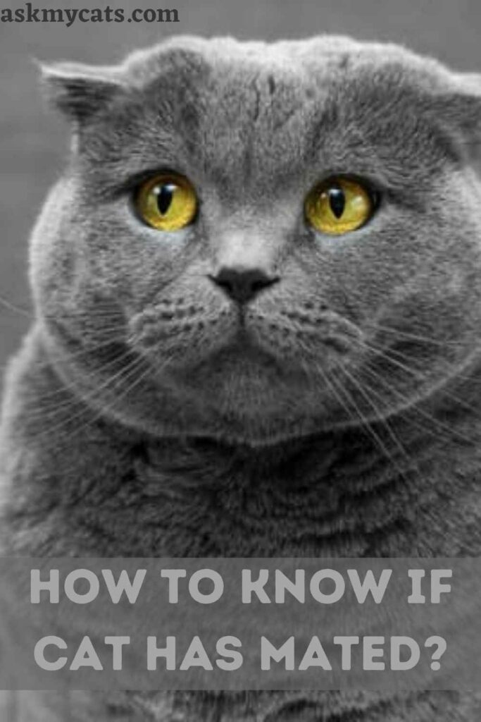 How To Know If Cat Has Mated
