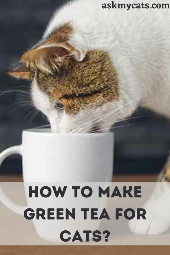 How To Make Green Tea For Cats?