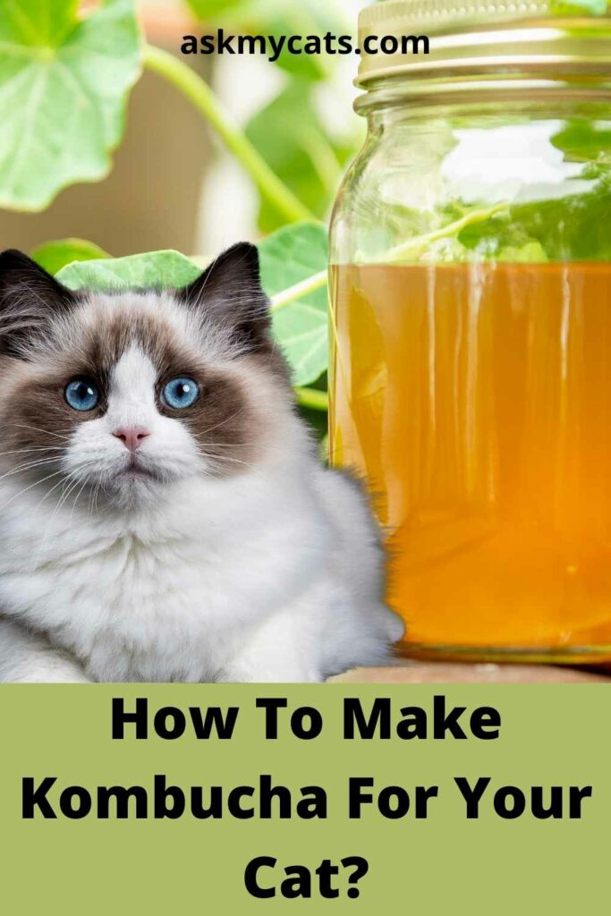 How To Make Kombucha For Your Cat?
