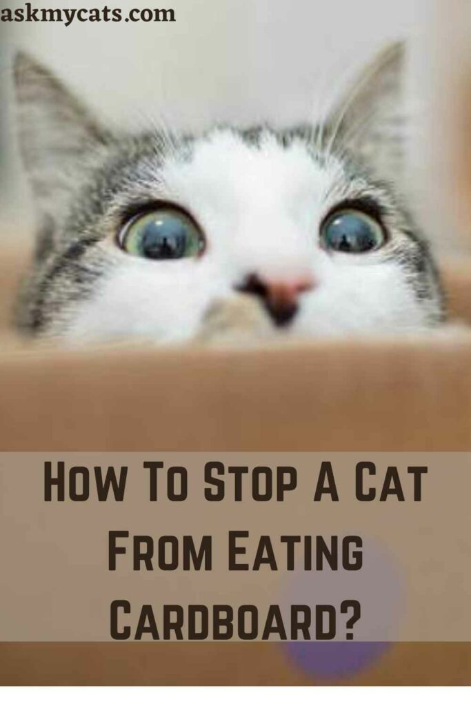 How To Stop A Cat From Eating Cardboard?