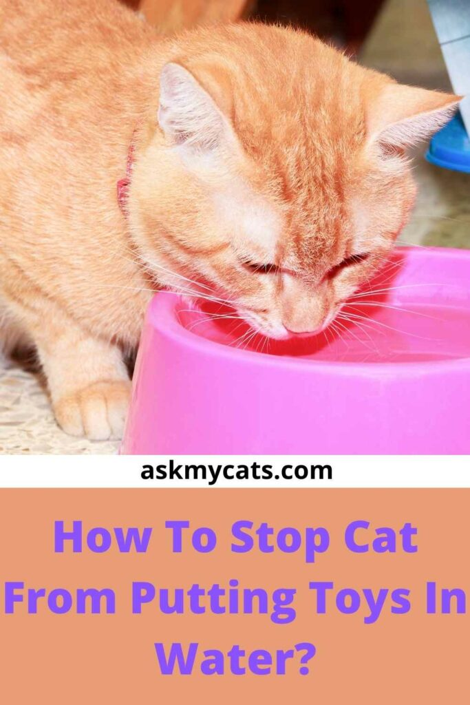 How To Stop Cat From Putting Toys In Water?