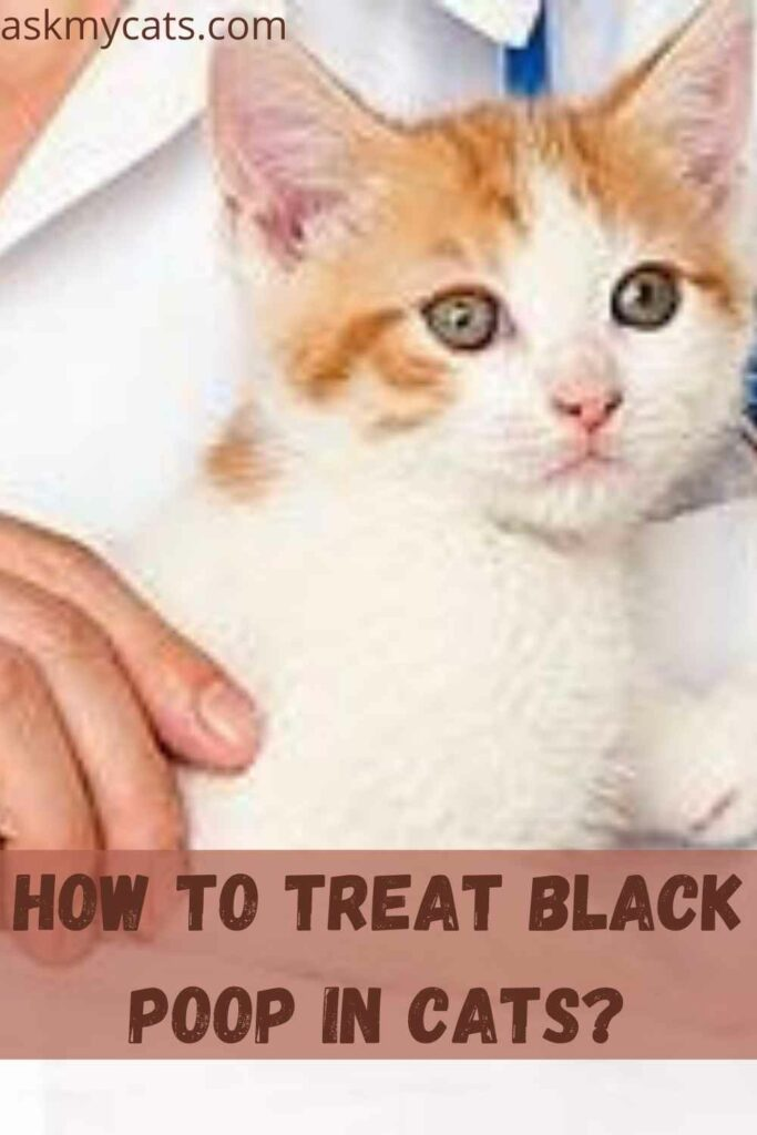 How To Treat Black Poop In Cats?
