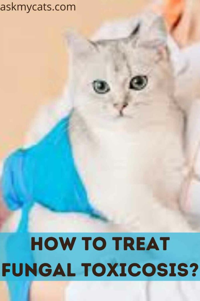 How To Treat Fungal Toxicosis?