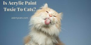 Is Acrylic Paint Toxic To Cats? Can It Cause Harm To Cats?