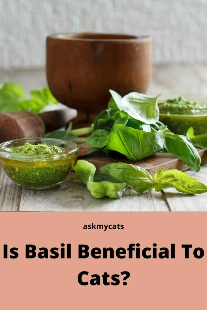 Is Basil Beneficial To Cats?