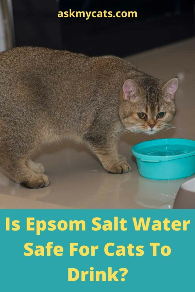 Is Epsom Salt Water Safe For Cats To Drink?