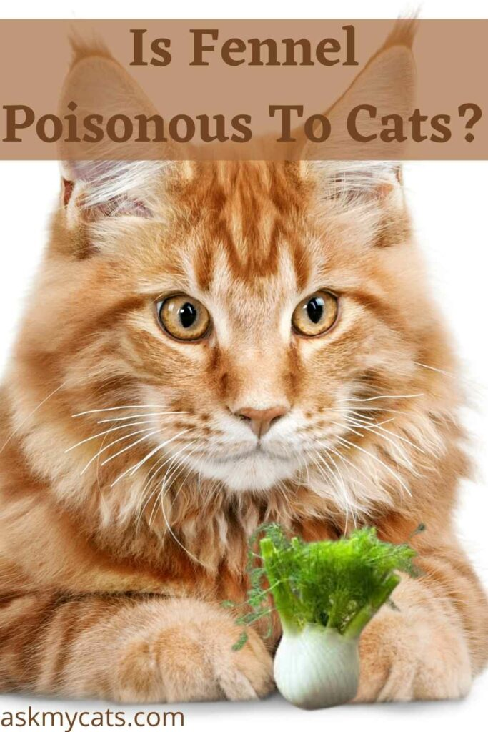 Is Fennel Poisonous To Cats?