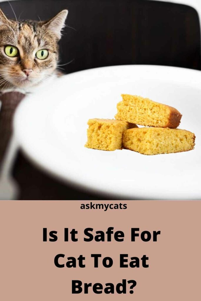 Is It Safe For  Cat To Eat  Bread?