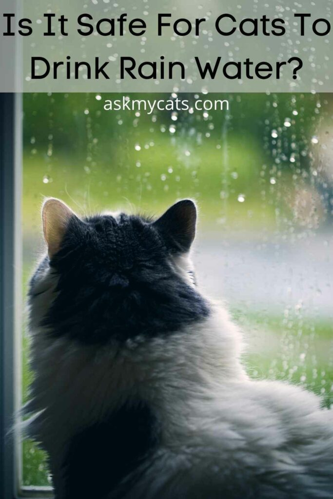 Is It Safe For Cats To Drink Rain Water?