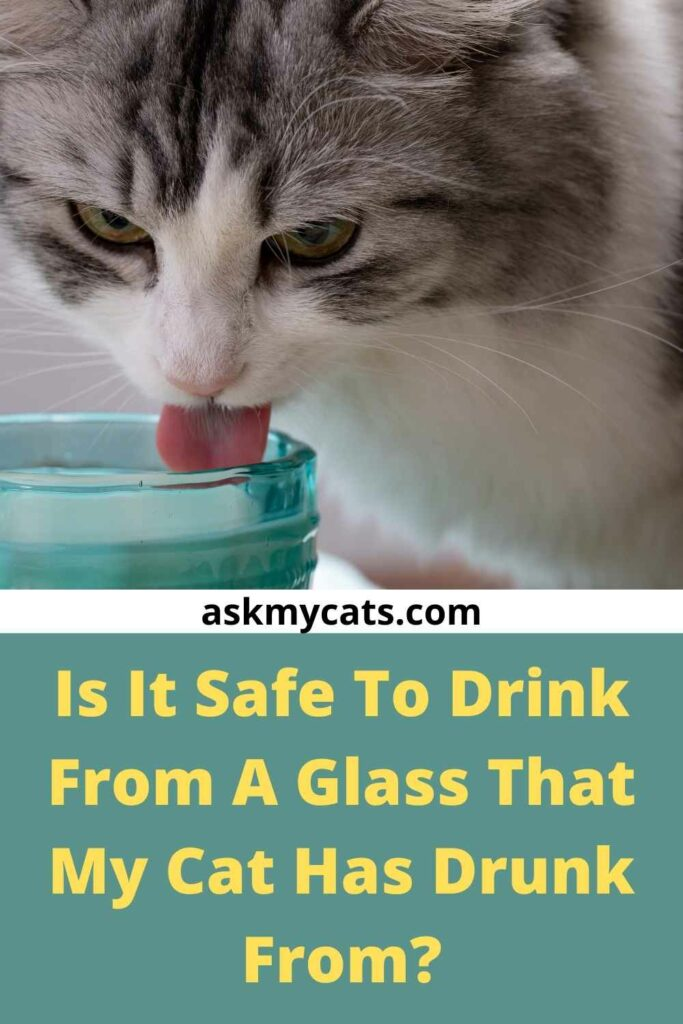 Is It Safe To Drink From A Glass That My Cat Has Drunk From?