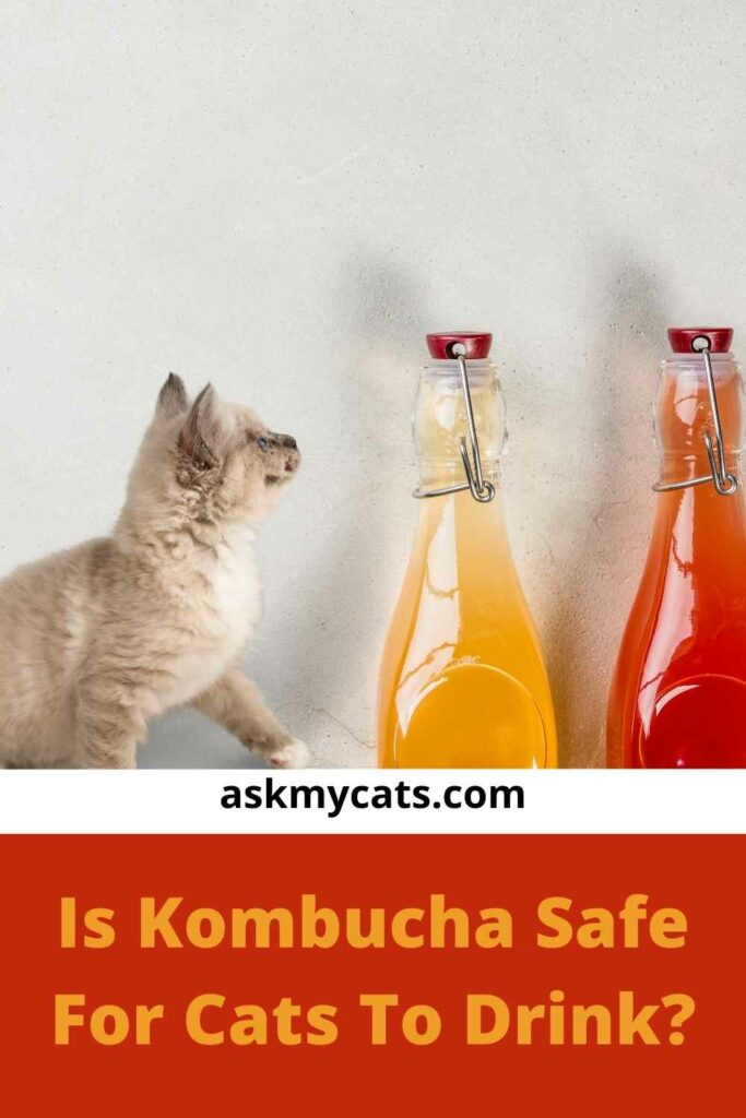 Is Kombucha Safe For Cats To Drink?
