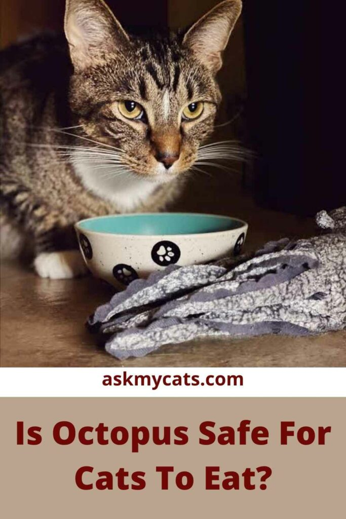 Is Octopus Safe For Cats To Eat?