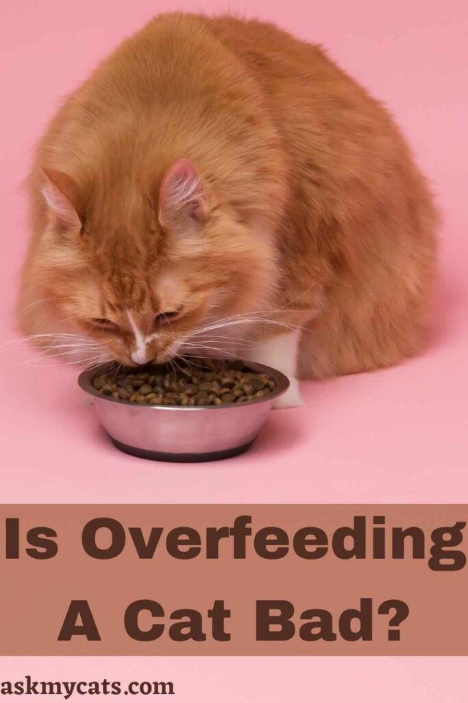 Is Overfeeding A Cat Bad?