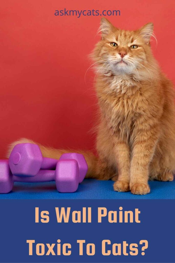 Is Wall Paint Toxic To Cats?