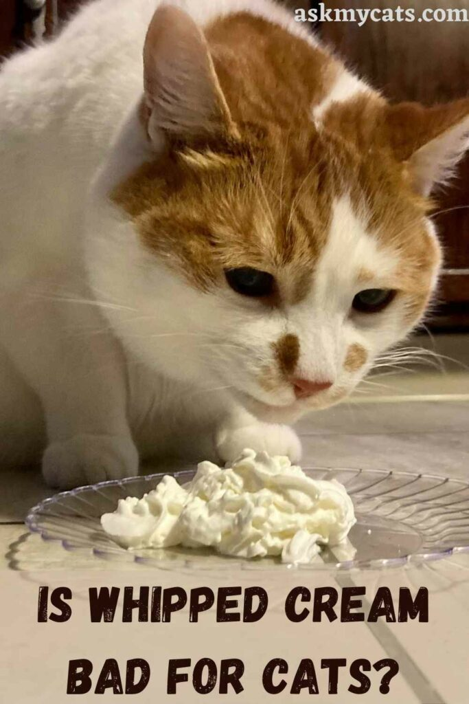 Is Whipped Cream Bad For Cats?