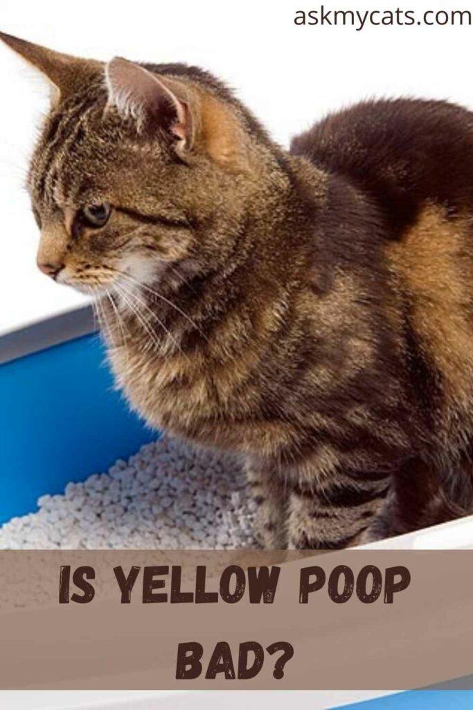 Is yellow poop bad?