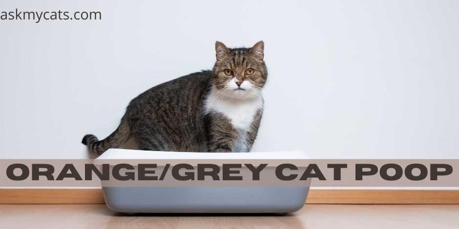 Orange/Grey Cat Poop
