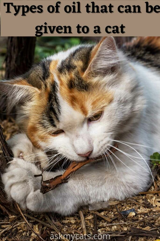 types of oil that can be given to a cat