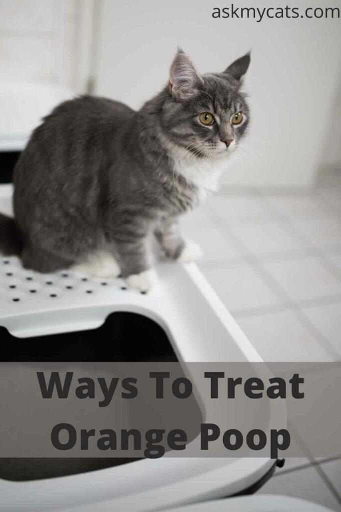 Ways To Treat Orange Poop
