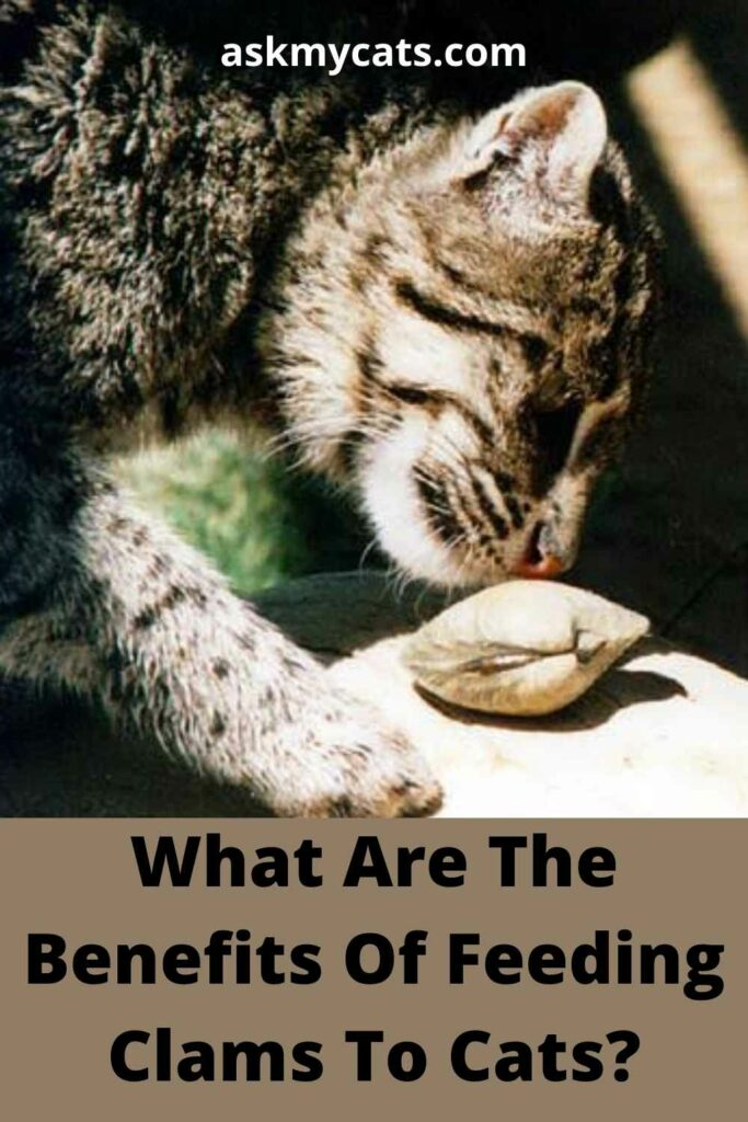 What Are The Benefits Of Feeding Clams To Cats?