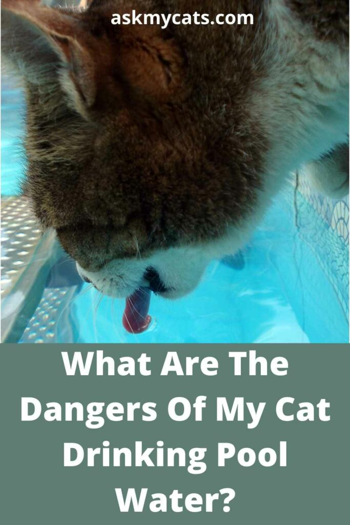What Are The Dangers Of My Cat Drinking Pool Water?