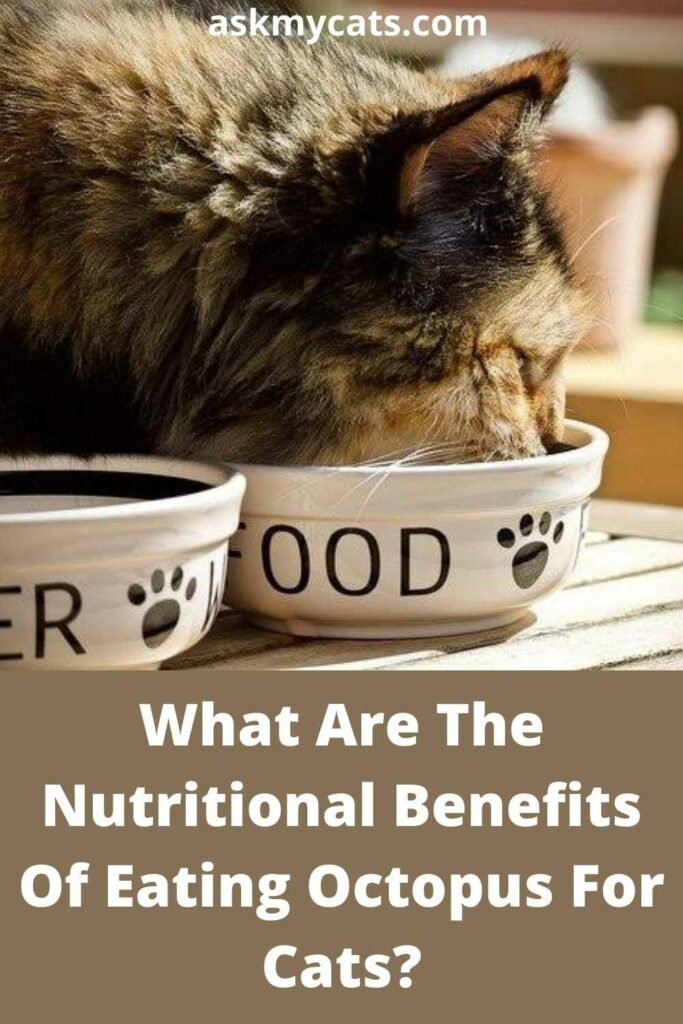 What Are The Nutritional Benefits Of Eating Octopus For Cats?