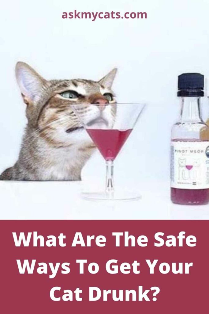 What Are The Safe Ways To Get Your Cat Drunk?