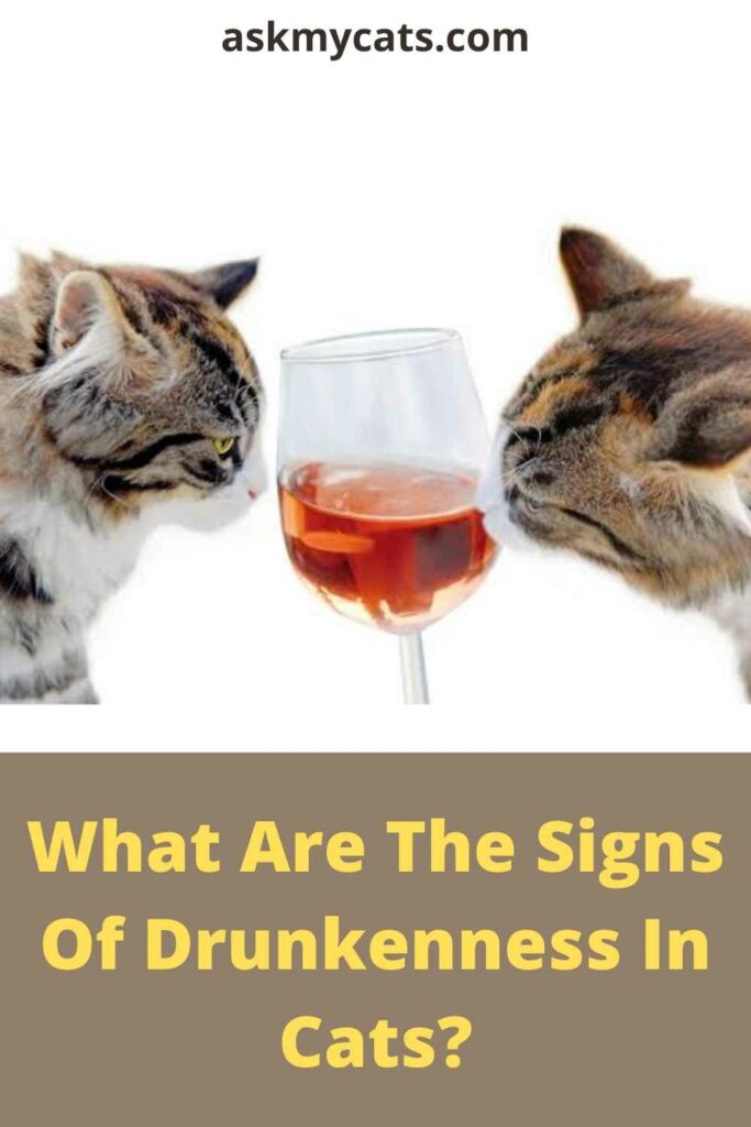 What Are The Signs Of Drunkenness In Cats?