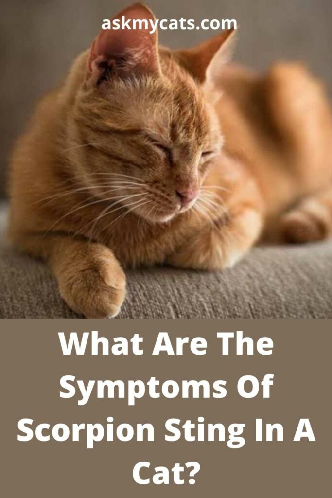 What Are The Symptoms Of Scorpion Sting In A Cat?