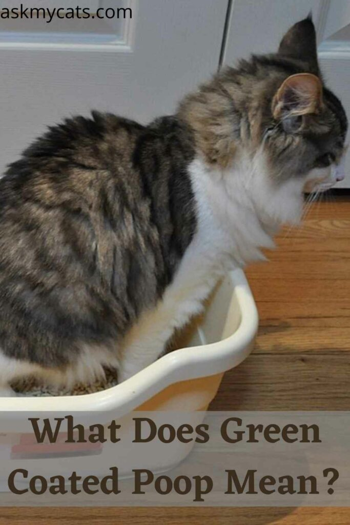 What Does Green Coated Poop Mean?
