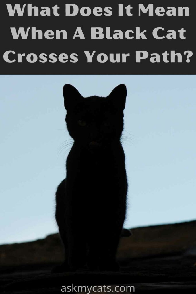 what does it mean when a black cat crosses your path?