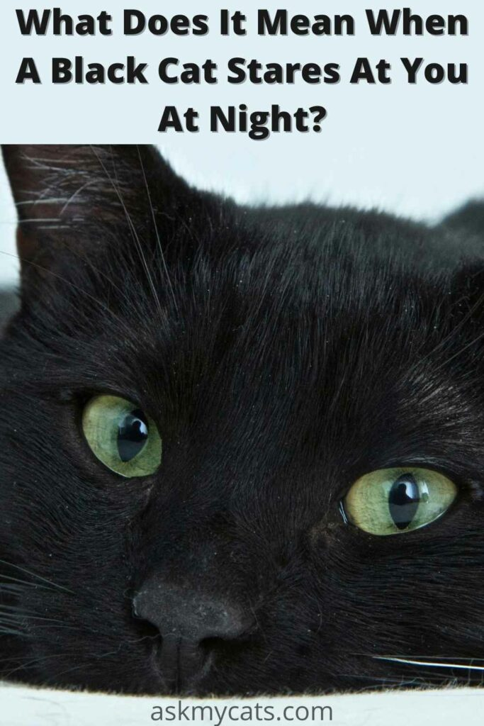 what does it mean when a black cat stares at you at night?