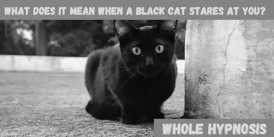 what does it mean when a black cat stares at you?