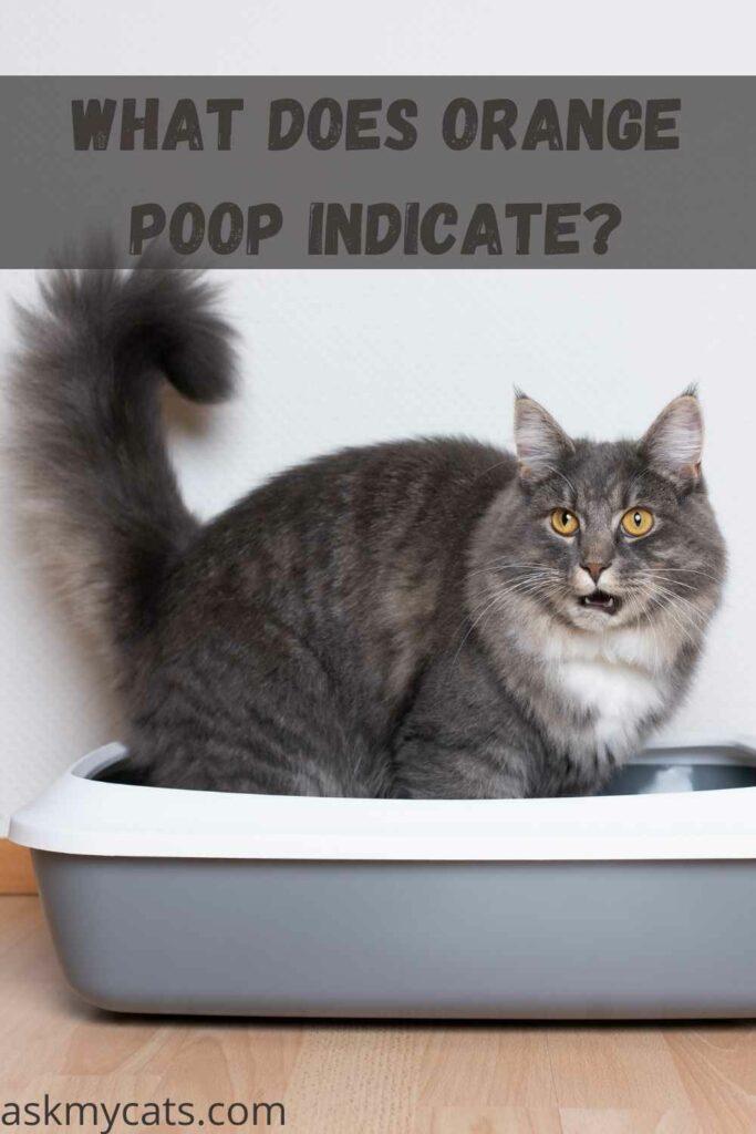 What Does Orange Poop Indicate