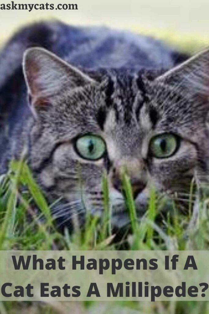 What Happens If A Cat Eats A Millipede?