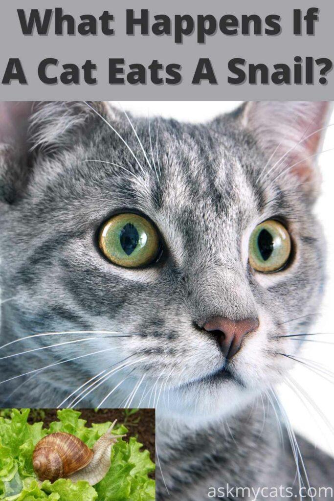 what happens if a cat eats a snail?